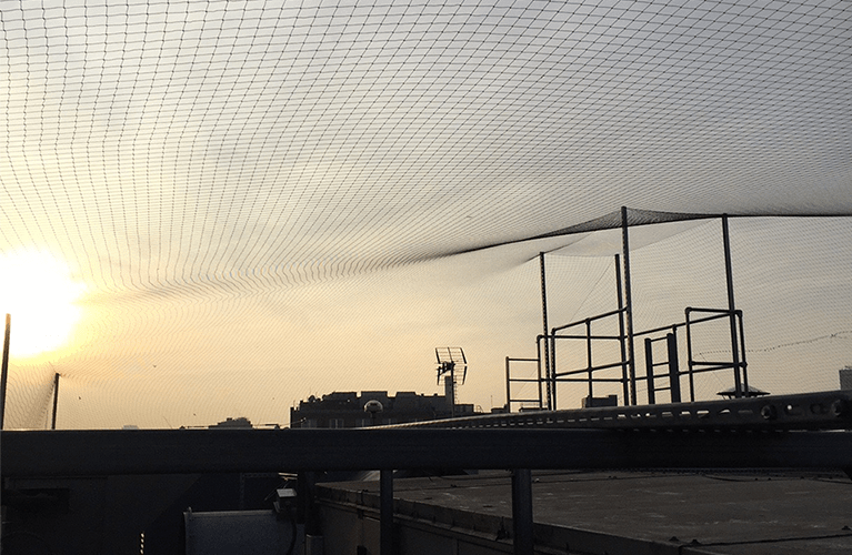 Bird netting to protect buildings from pigeon infestation. Installed by Protex Pest Control