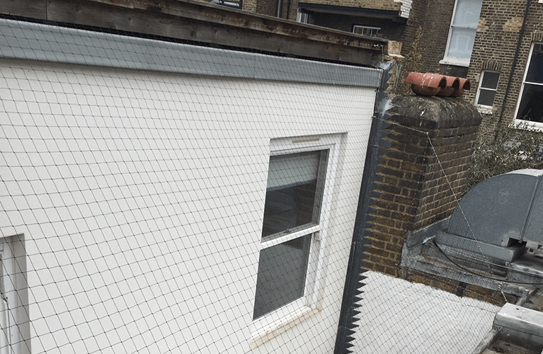Bird neeting for properties installed by Protex Pest Control Services